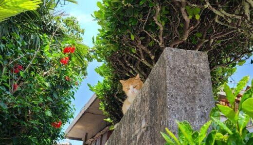 【穴場】宮古島から15分、神の住む島『大神島』へ行ってきました